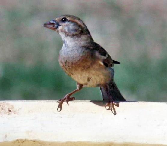bird-4.jpeg