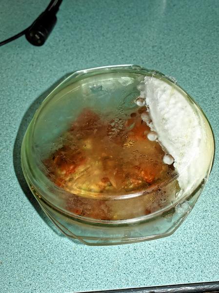 frozen-kimchi-1.jpeg