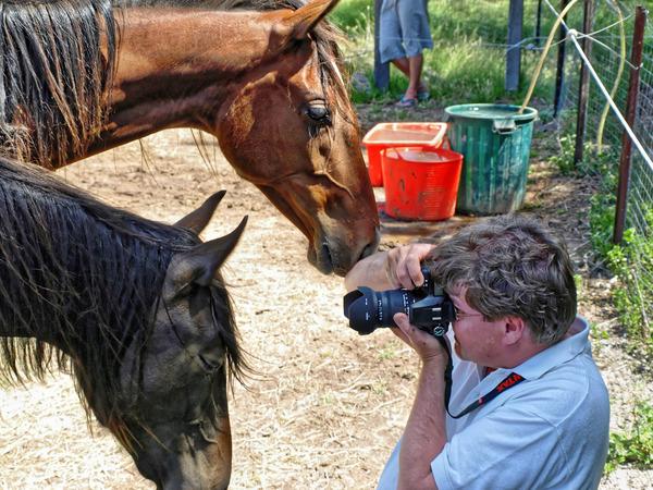 horses-3.jpeg