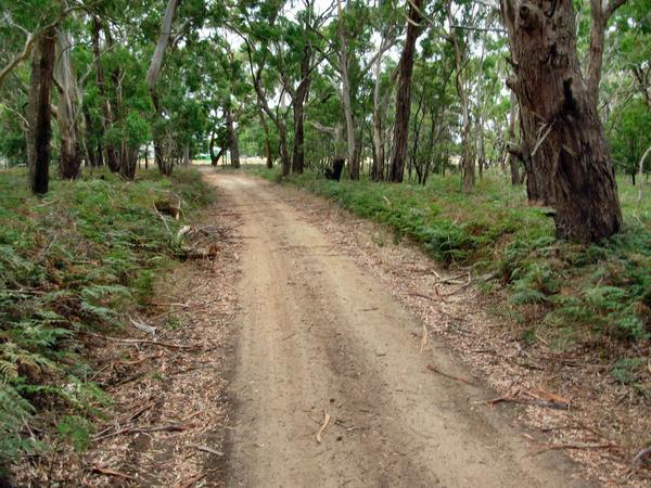 swamp-road.jpeg