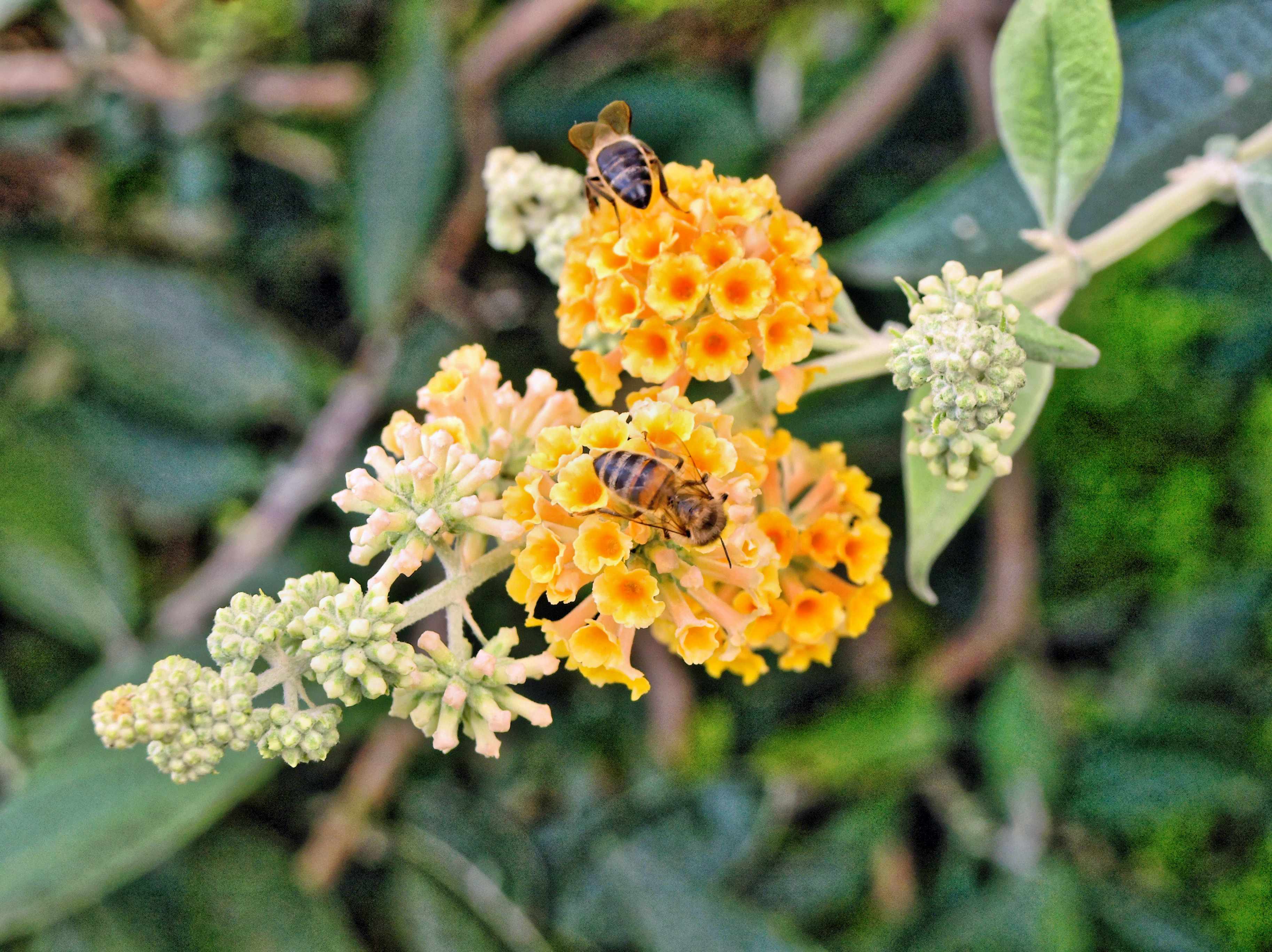 bees-flower-1.jpeg