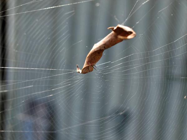spider-web.jpeg