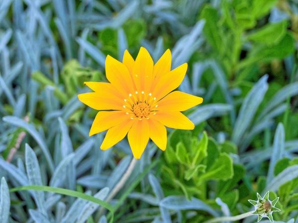 yellow-flowers-2.jpeg