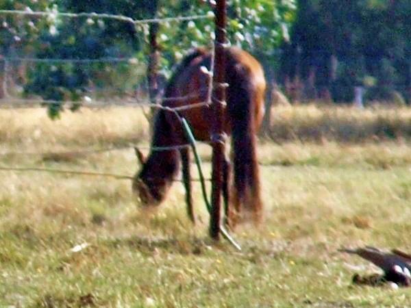 horses-1300mm.jpeg