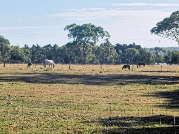 horses-85mm.jpeg