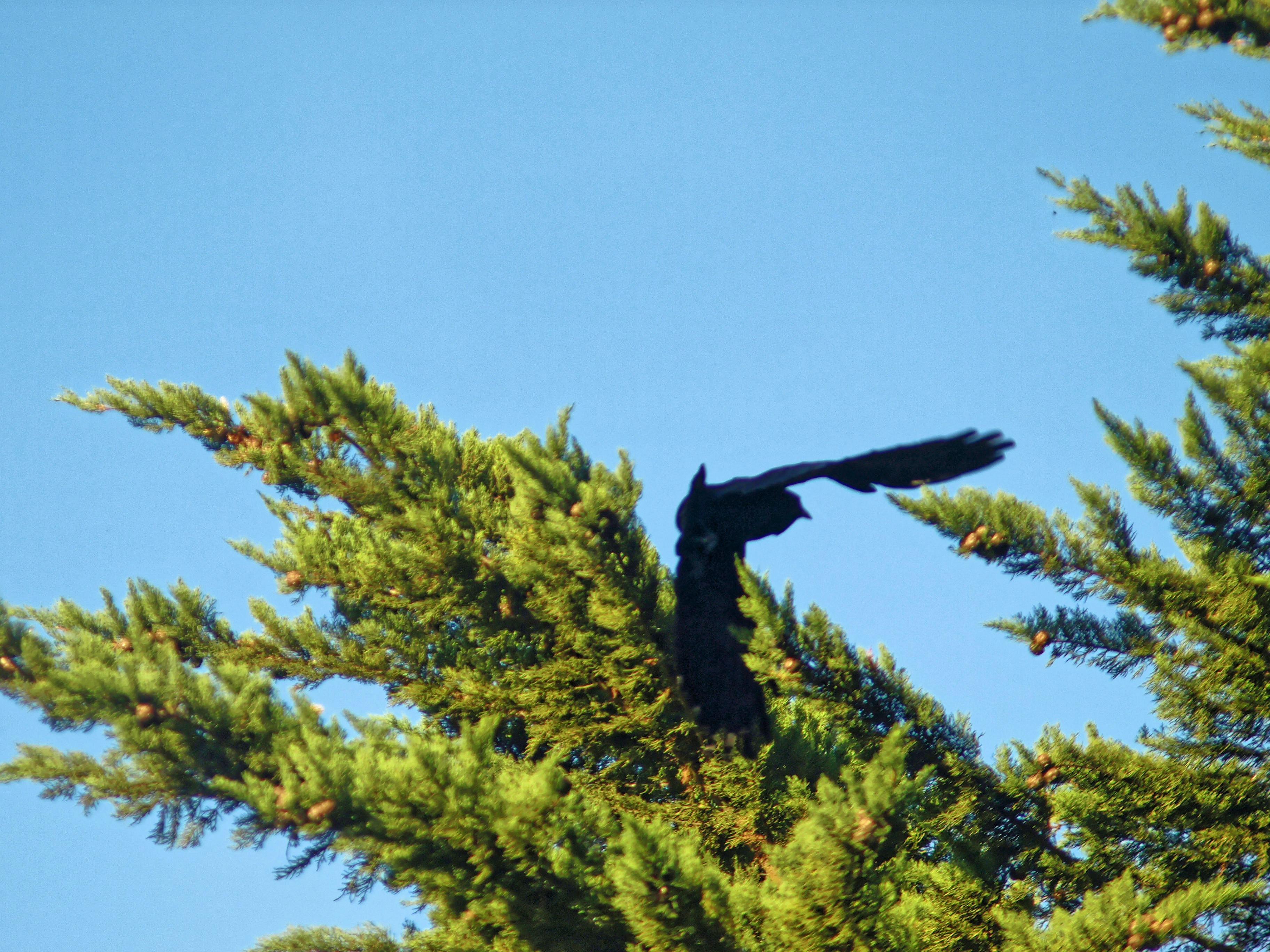 bird-1.jpeg