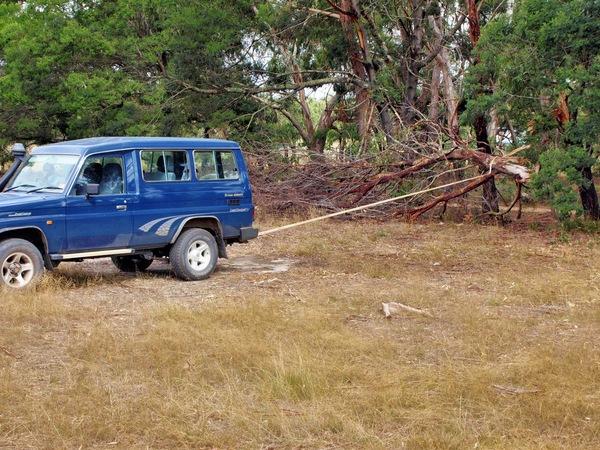 pulling-branch-2.jpeg
