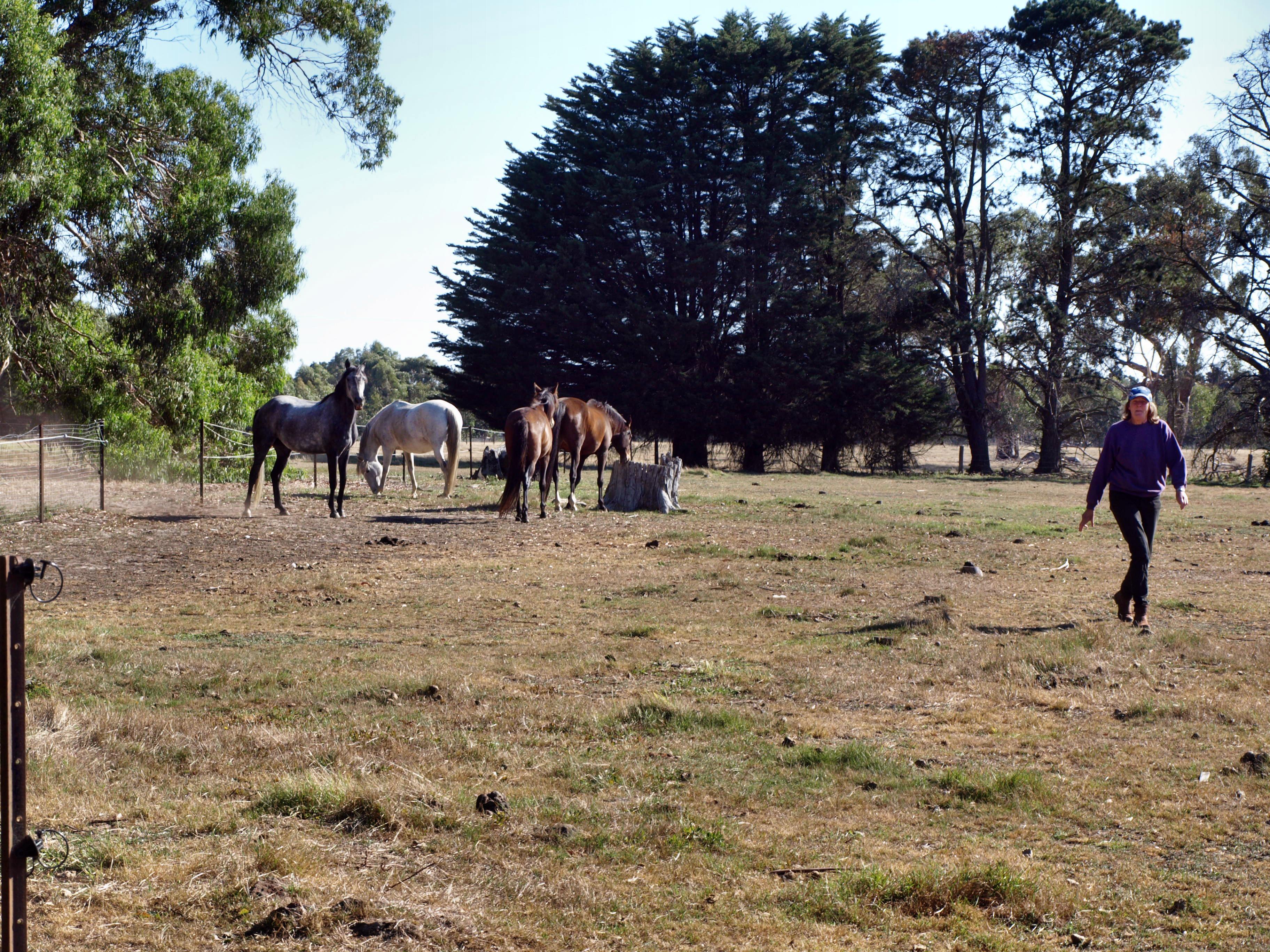 horses-0.jpeg