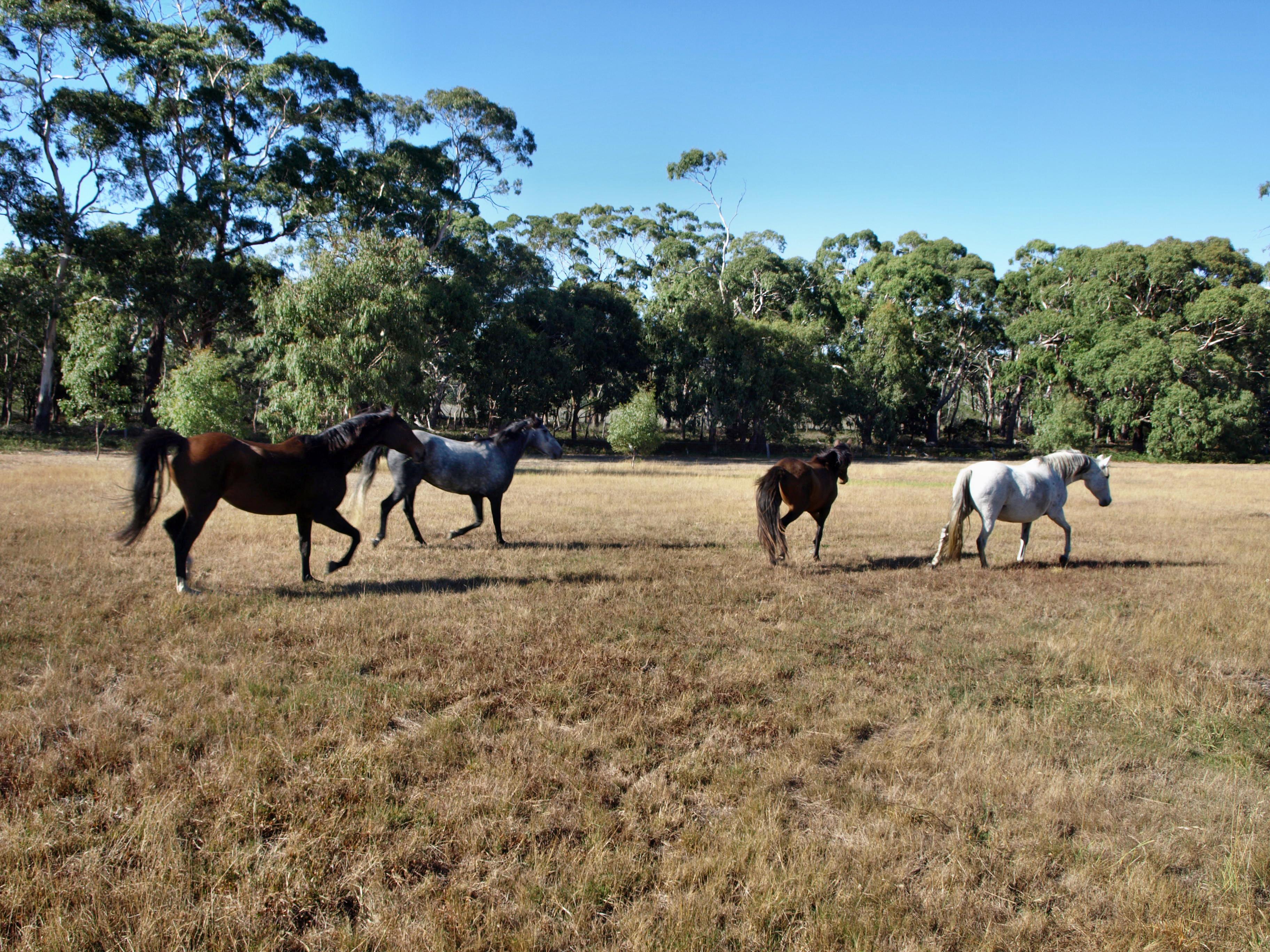 horses-7.jpeg