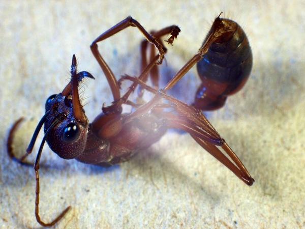 dead-ant.jpeg