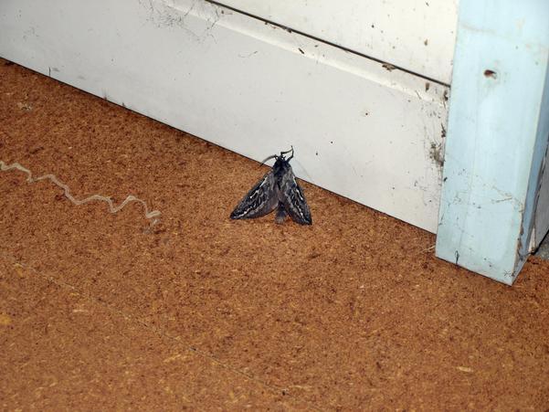 moth-1.jpeg