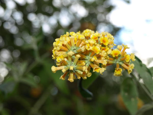 mystery-flower-6.jpeg