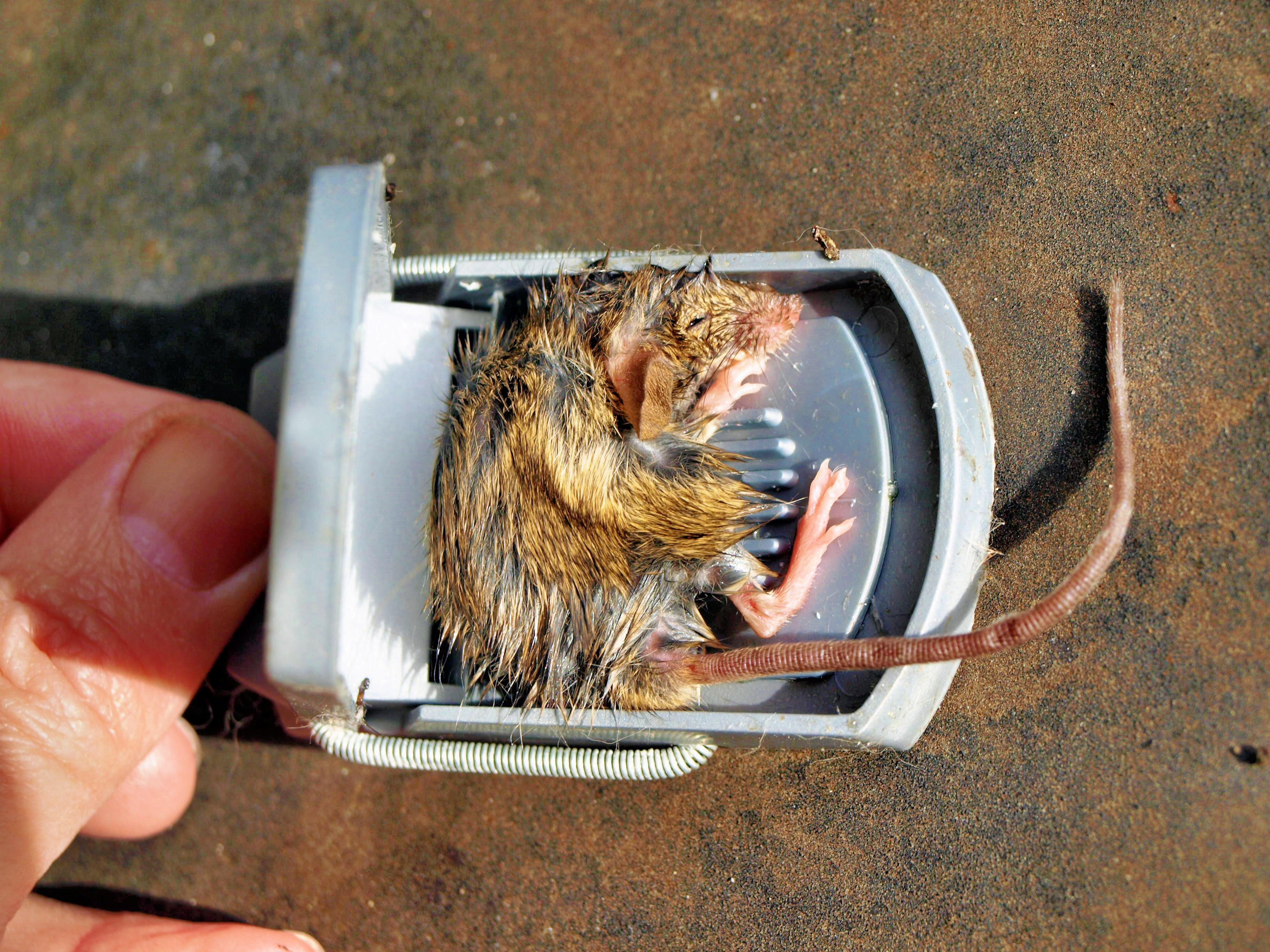 mousetrap-2.jpeg