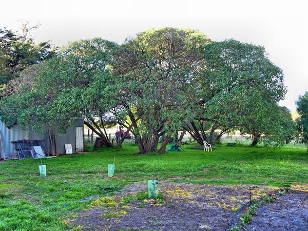shade-tree.jpeg