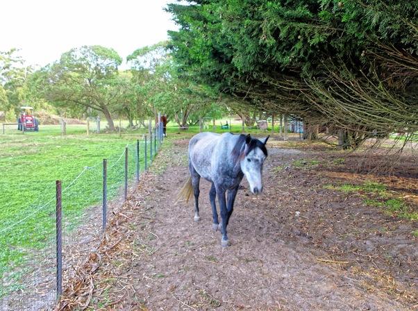 horse-run-1.jpeg