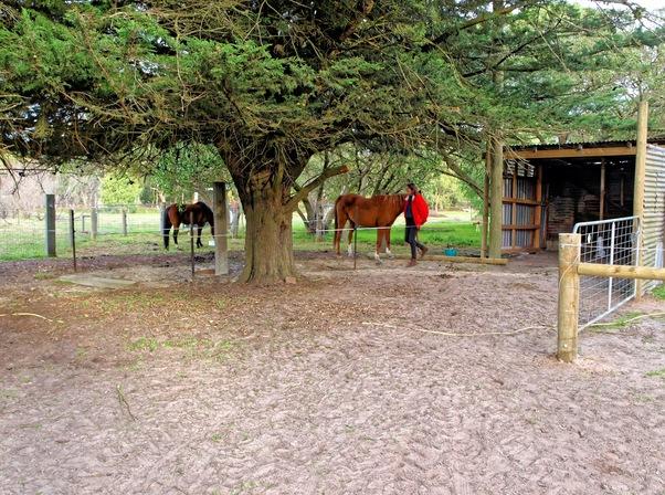 horse-run-2.jpeg