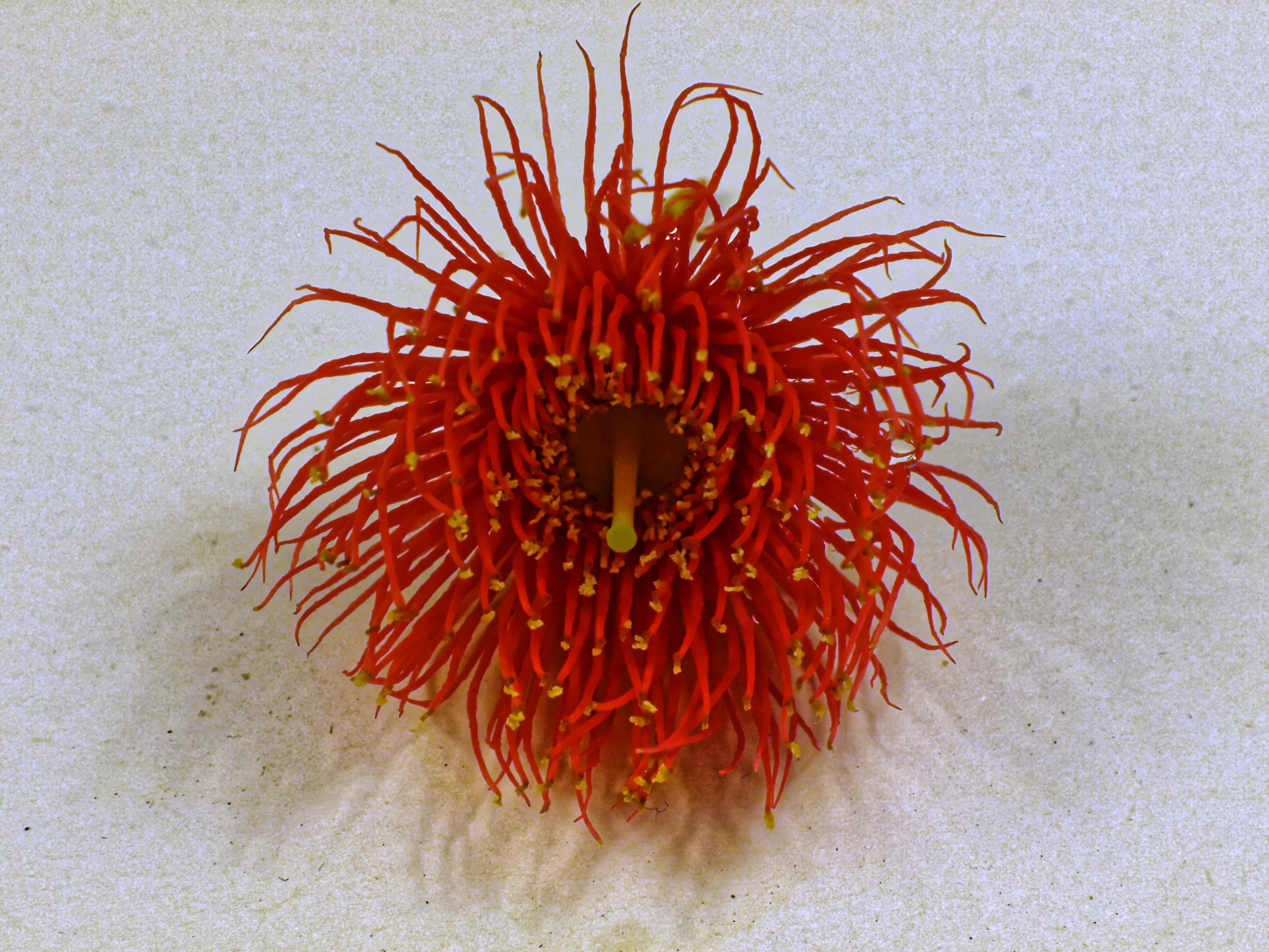 gum-flower-8.jpeg