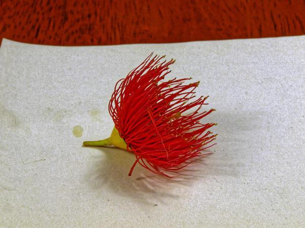 gum-flower-1.jpeg