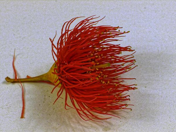 gum-flower-7.jpeg