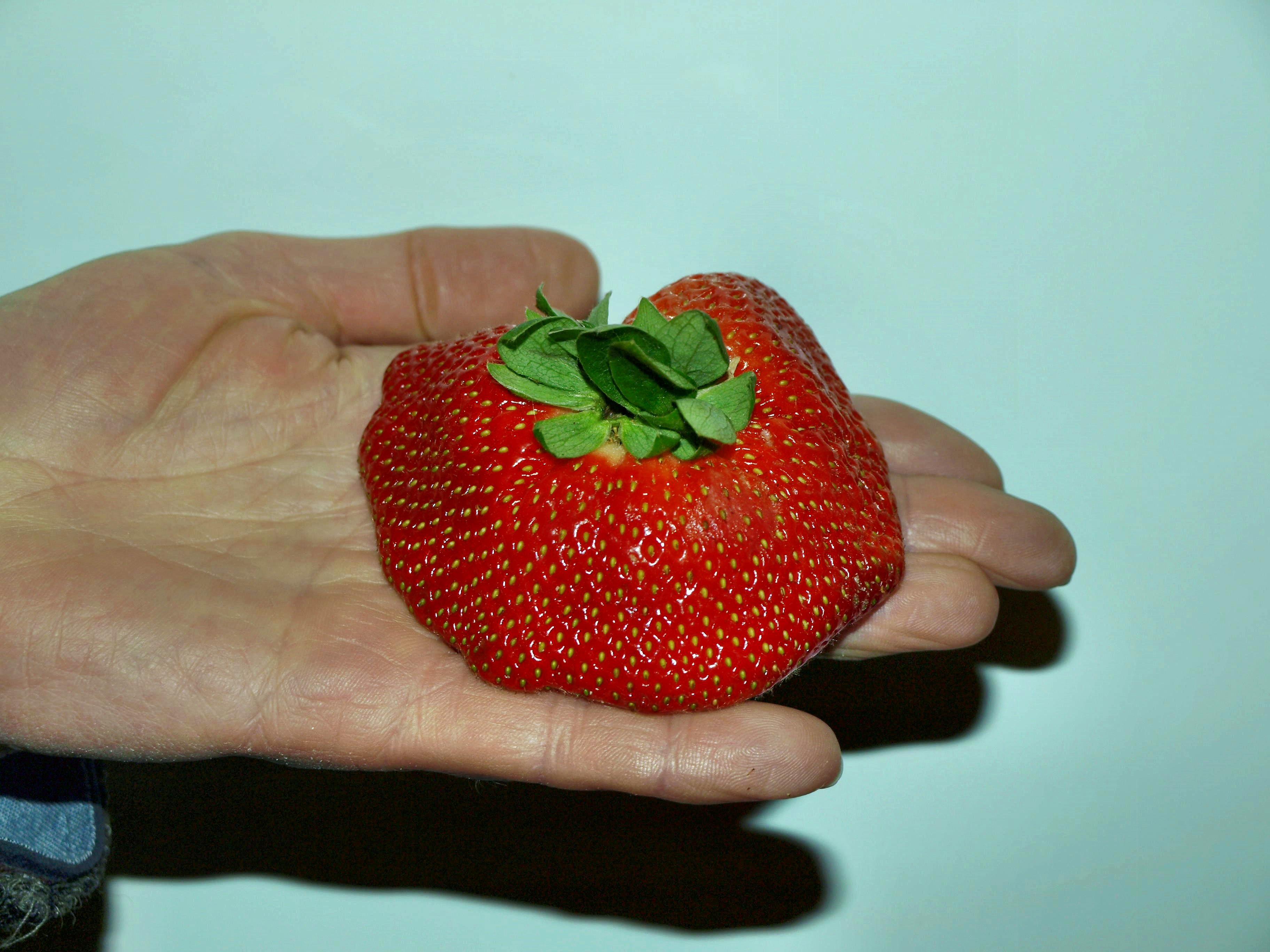 strawberry-2.jpeg