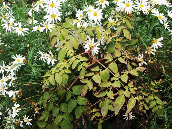 mystery-flower-5.jpeg