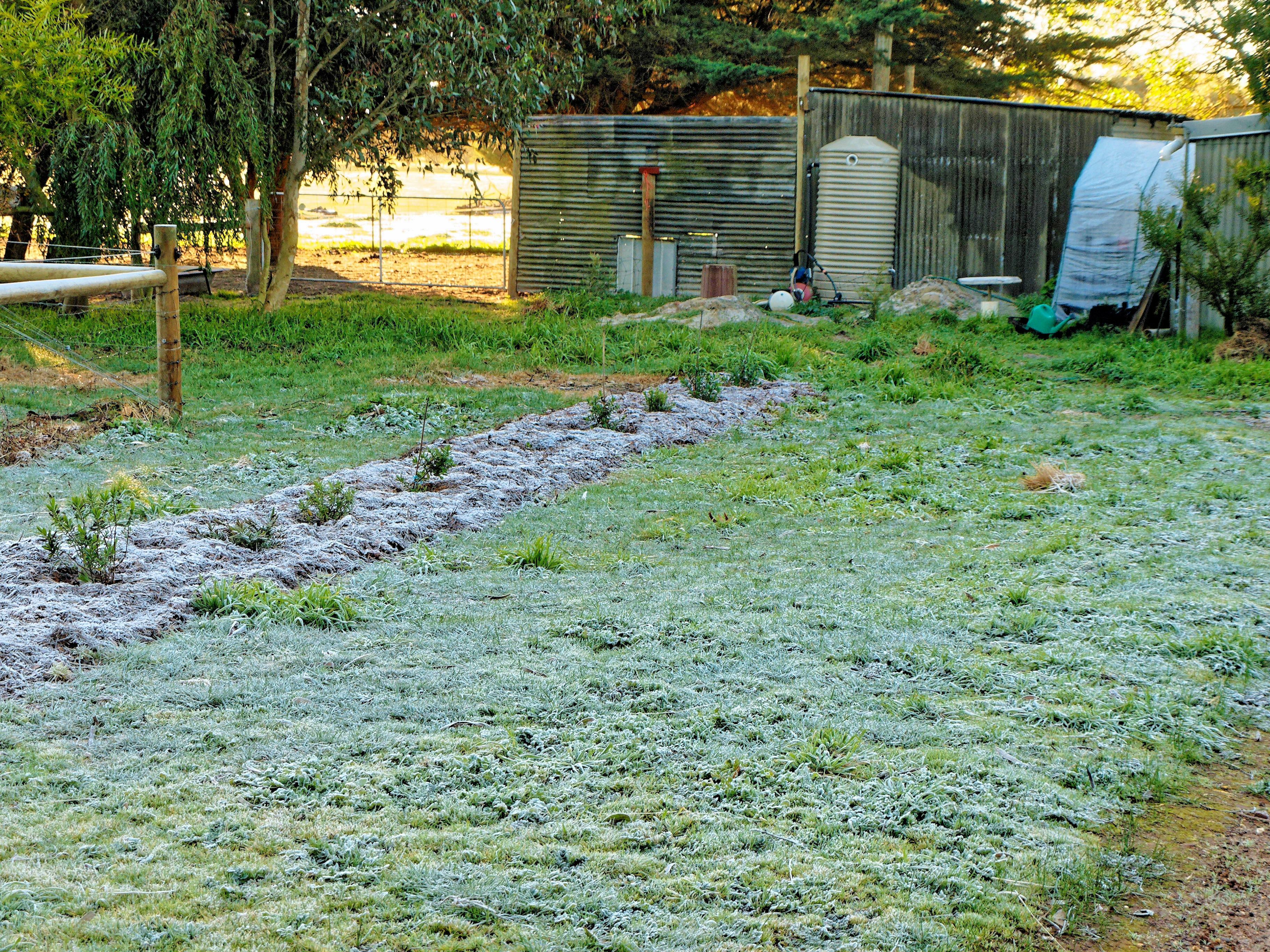 frost-1.jpeg