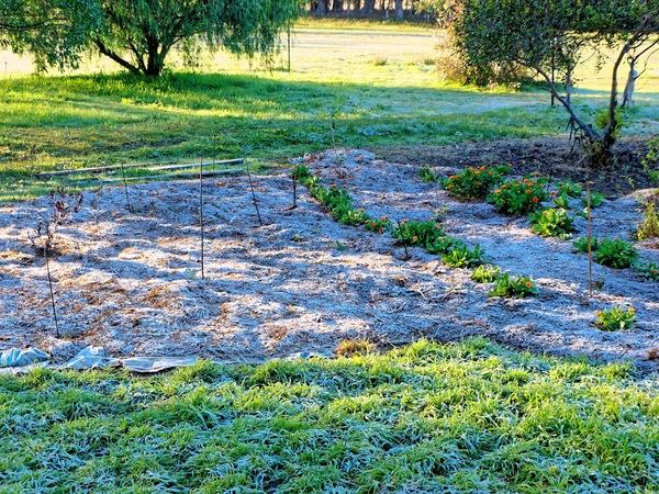 frost-2.jpeg
