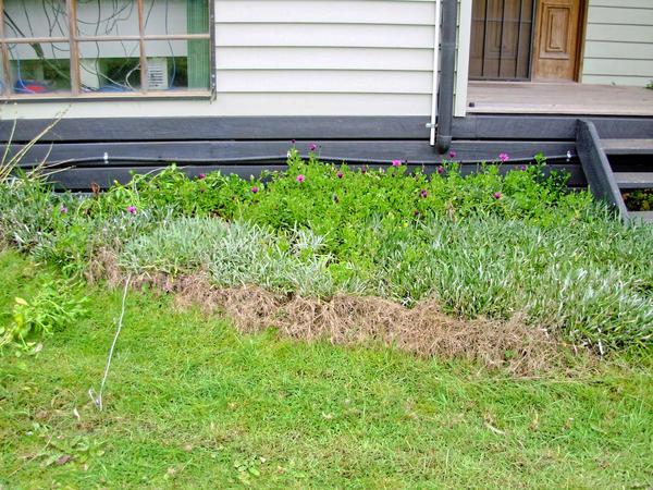 garden-s-before.jpeg