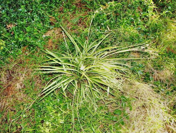 mystery-grass-1.jpeg