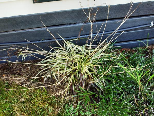 mystery-grass-2.jpeg