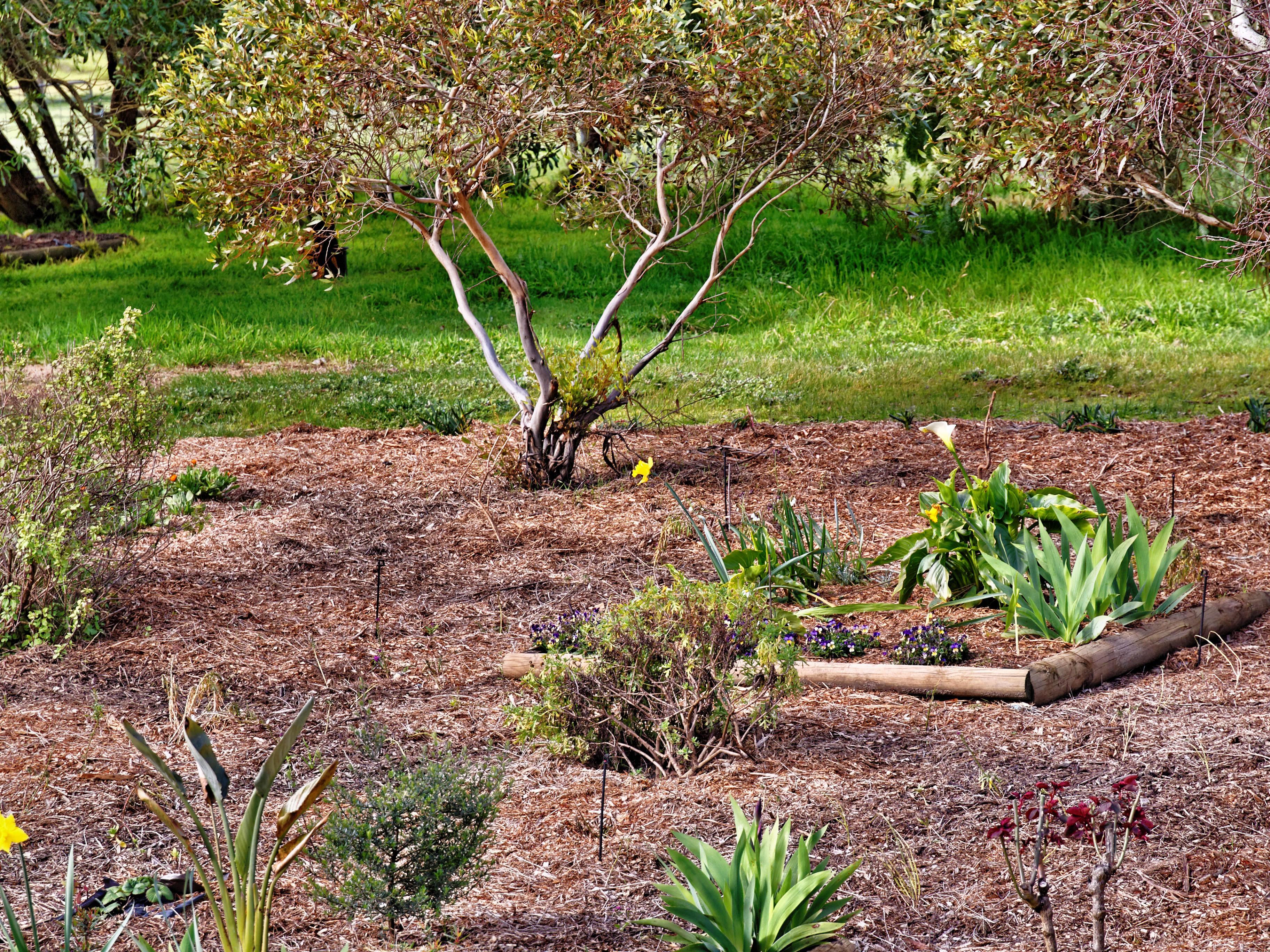 garden-60mm.jpeg