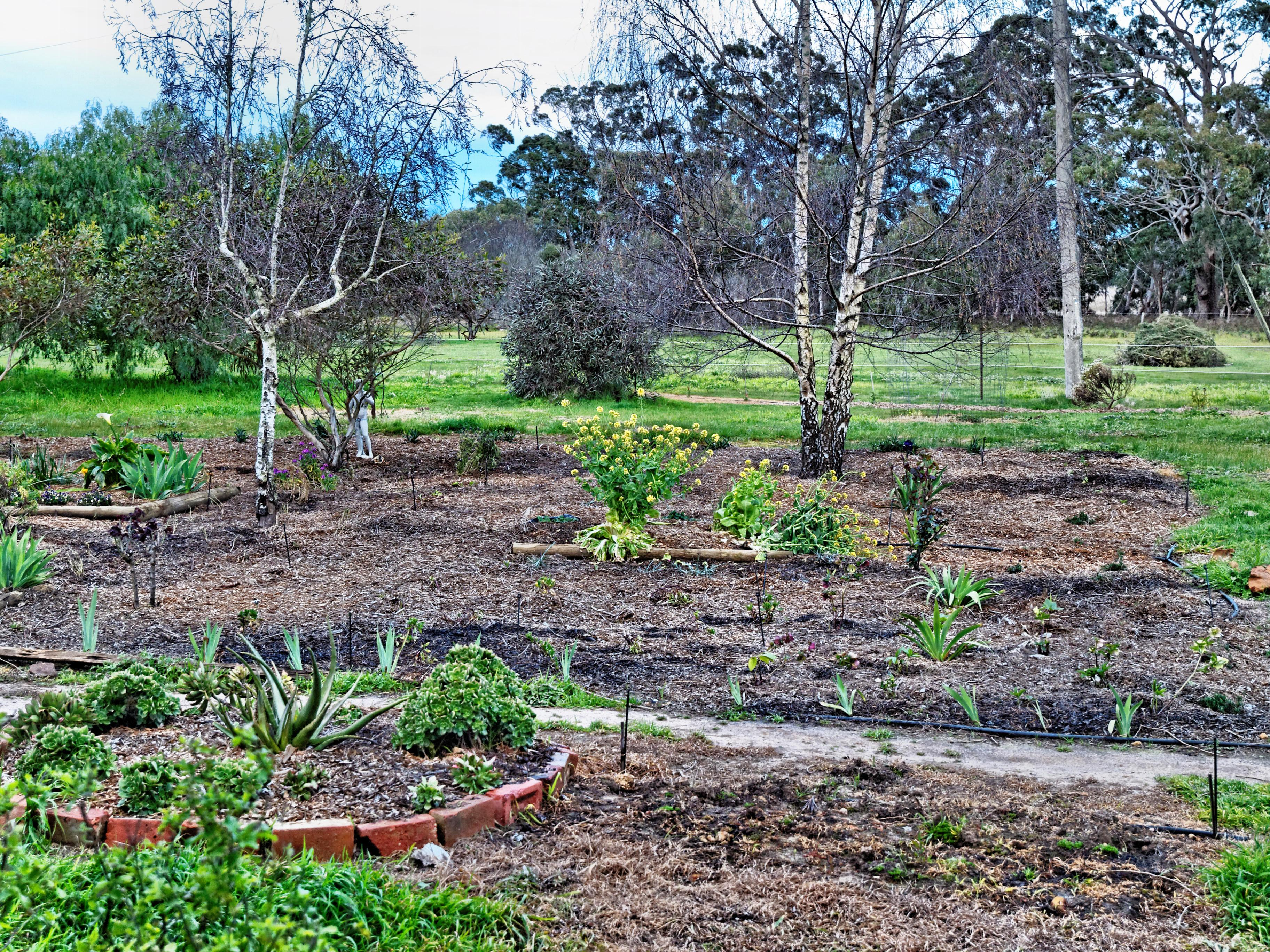 Garden-3.jpeg