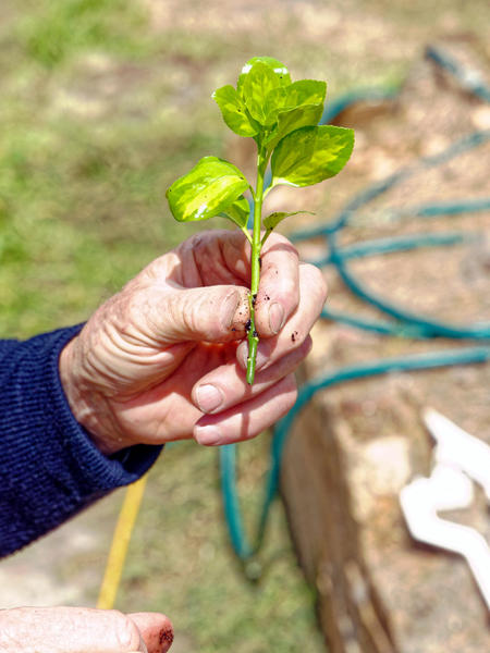 gardening-1.jpeg