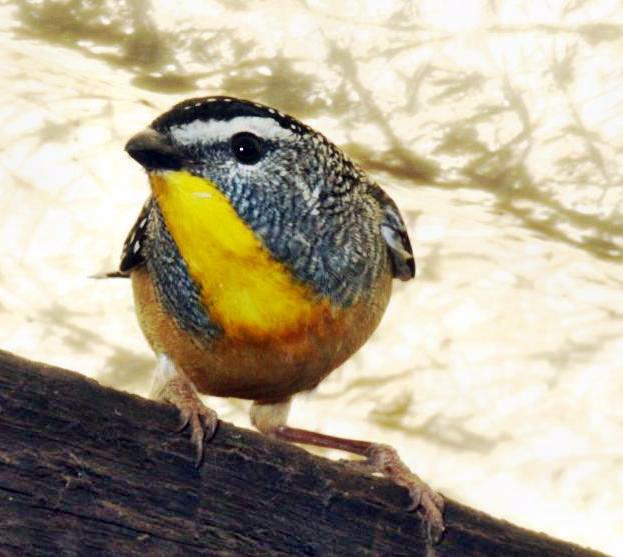bird-2.detail.jpeg