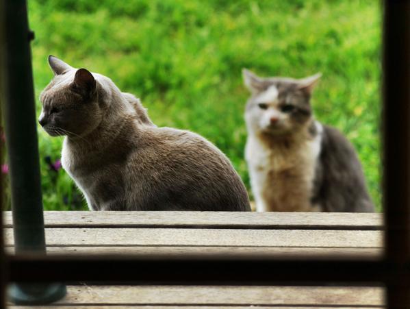 cats-1.jpeg