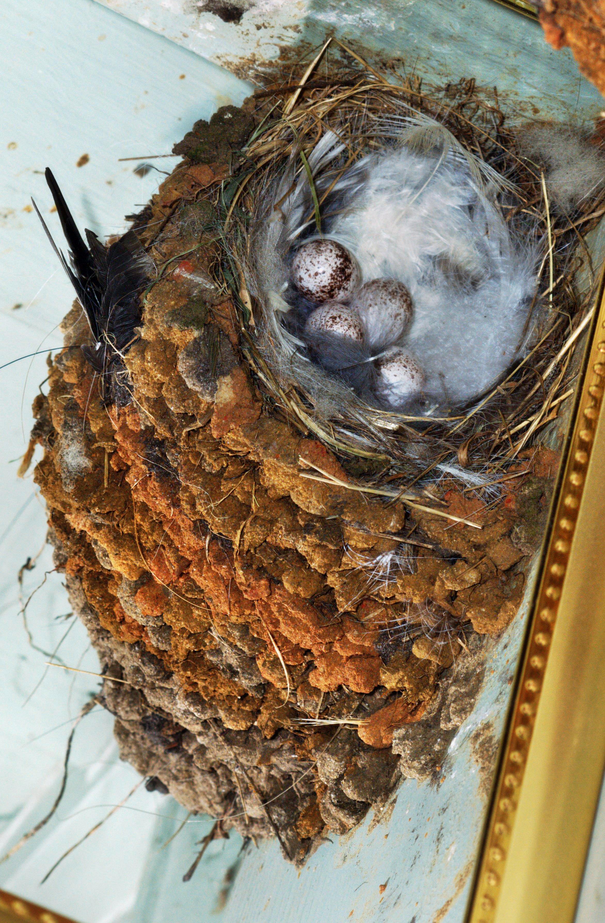 swallows-nest-1.jpeg