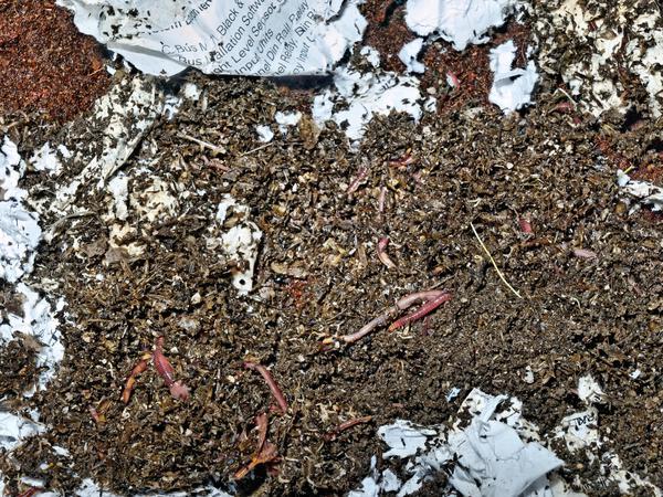 worm-farm-3.jpeg