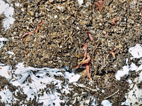 worm-farm-5.jpeg