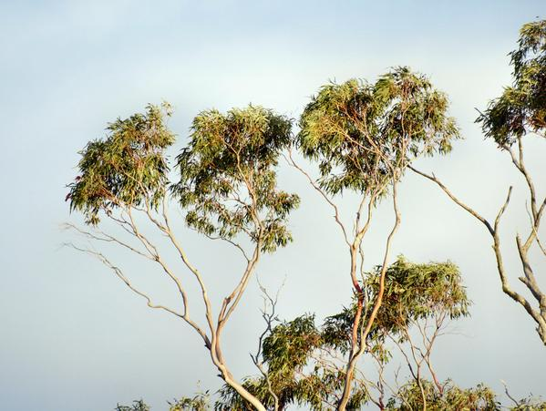 treetops-1.jpeg