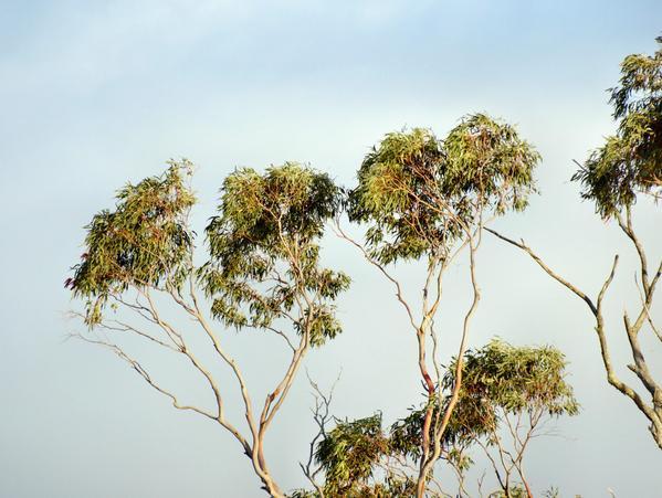 treetops-2.jpeg