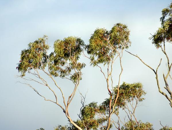 treetops-3.jpeg