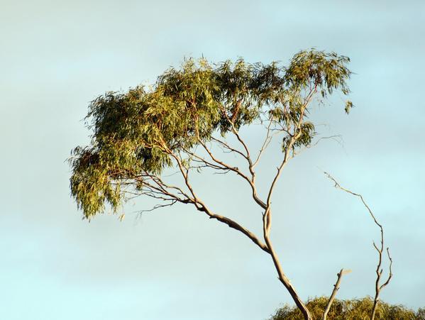 treetops-4.jpeg