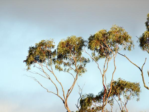 treetops-6.jpeg