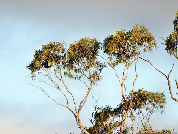 treetops-7.jpeg