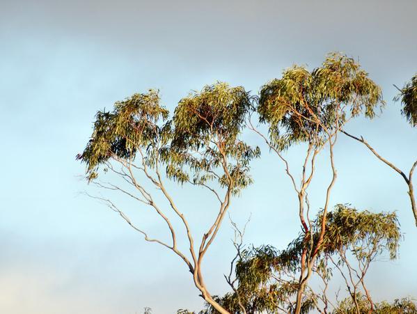treetops-8.jpeg