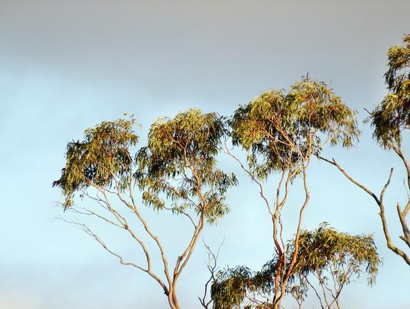 treetops-9.jpeg