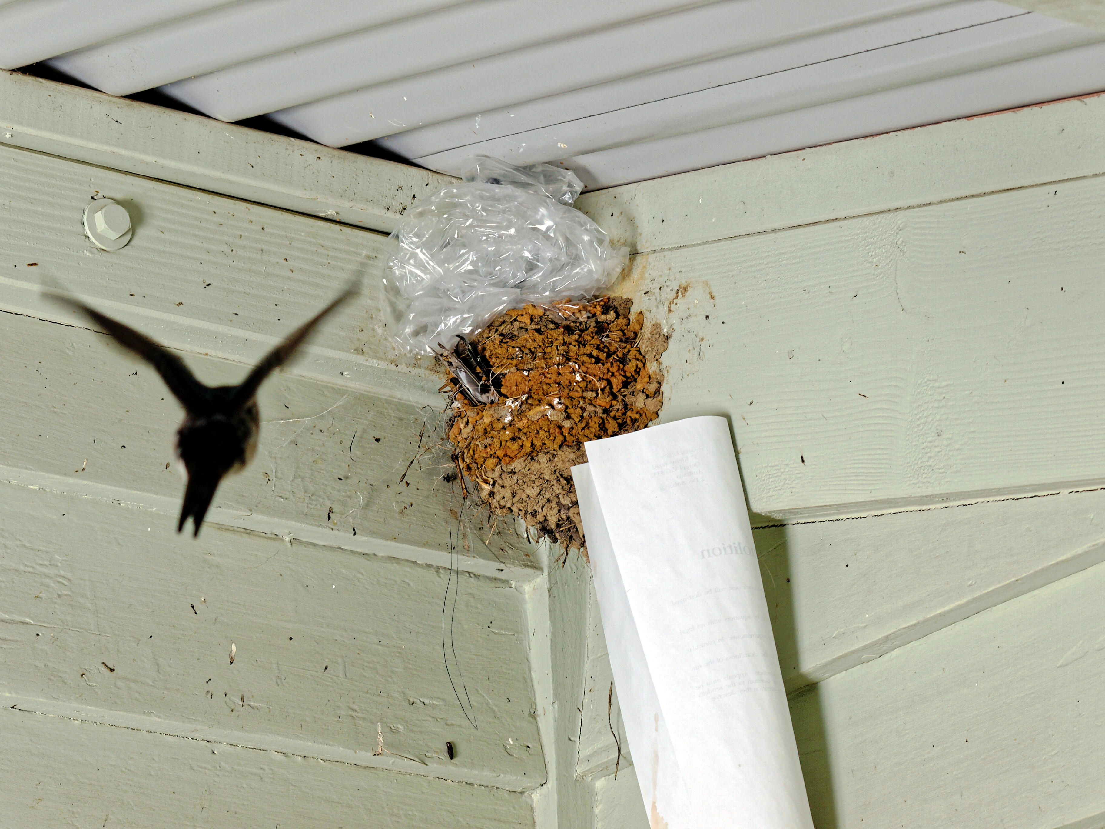swallows-nest-2.jpeg