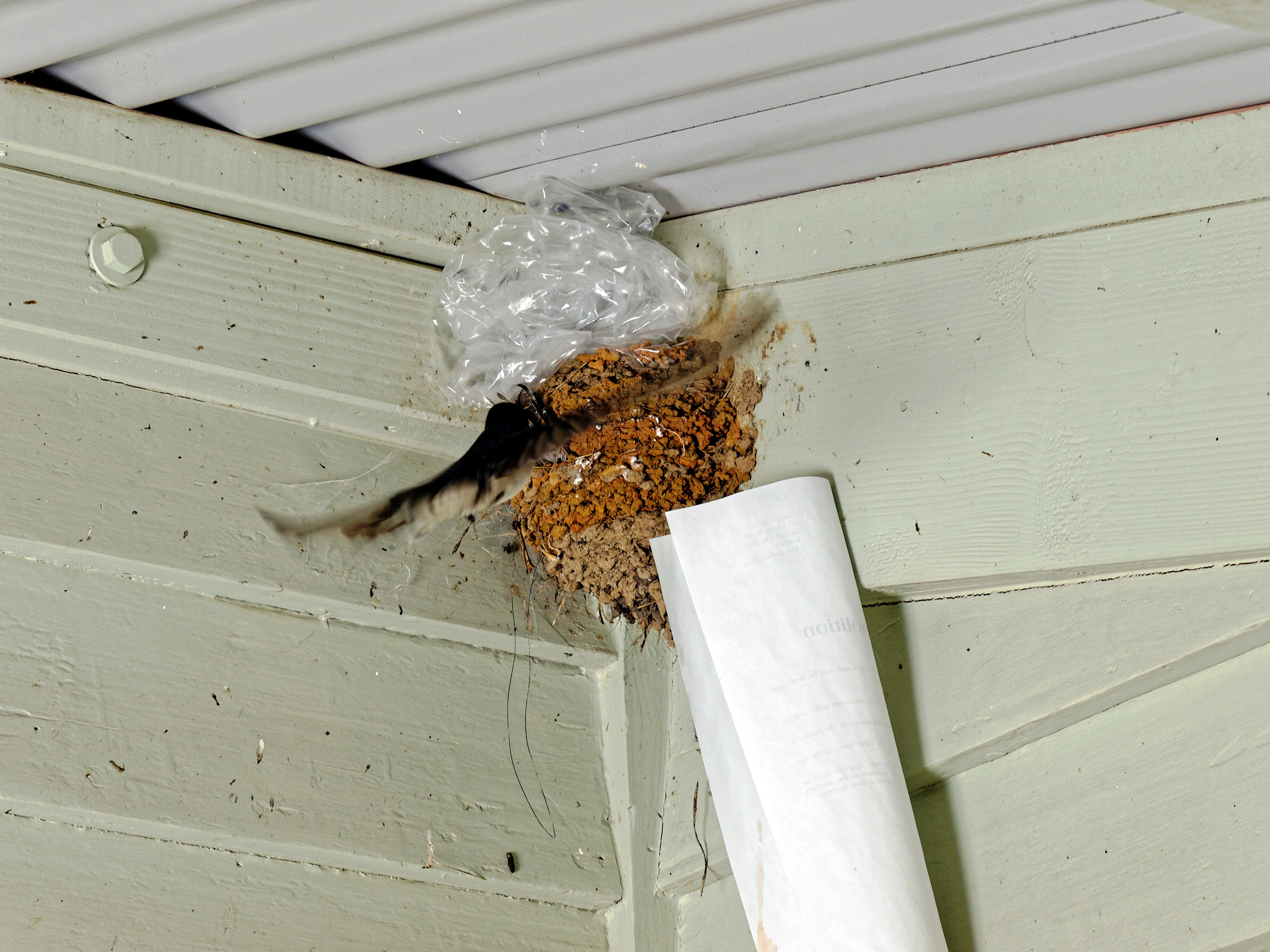 swallows-nest-4.jpeg