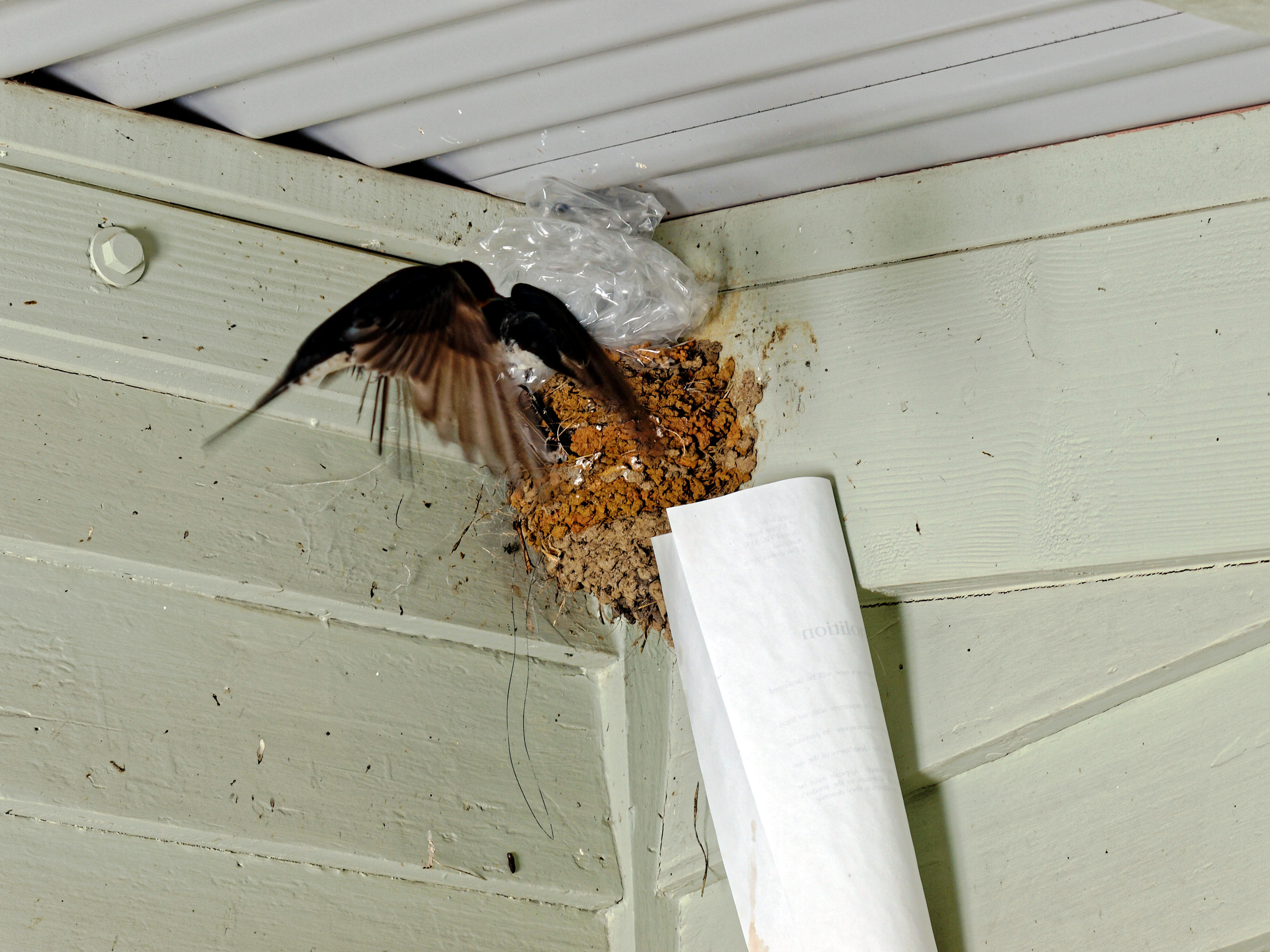 swallows-nest-6.jpeg