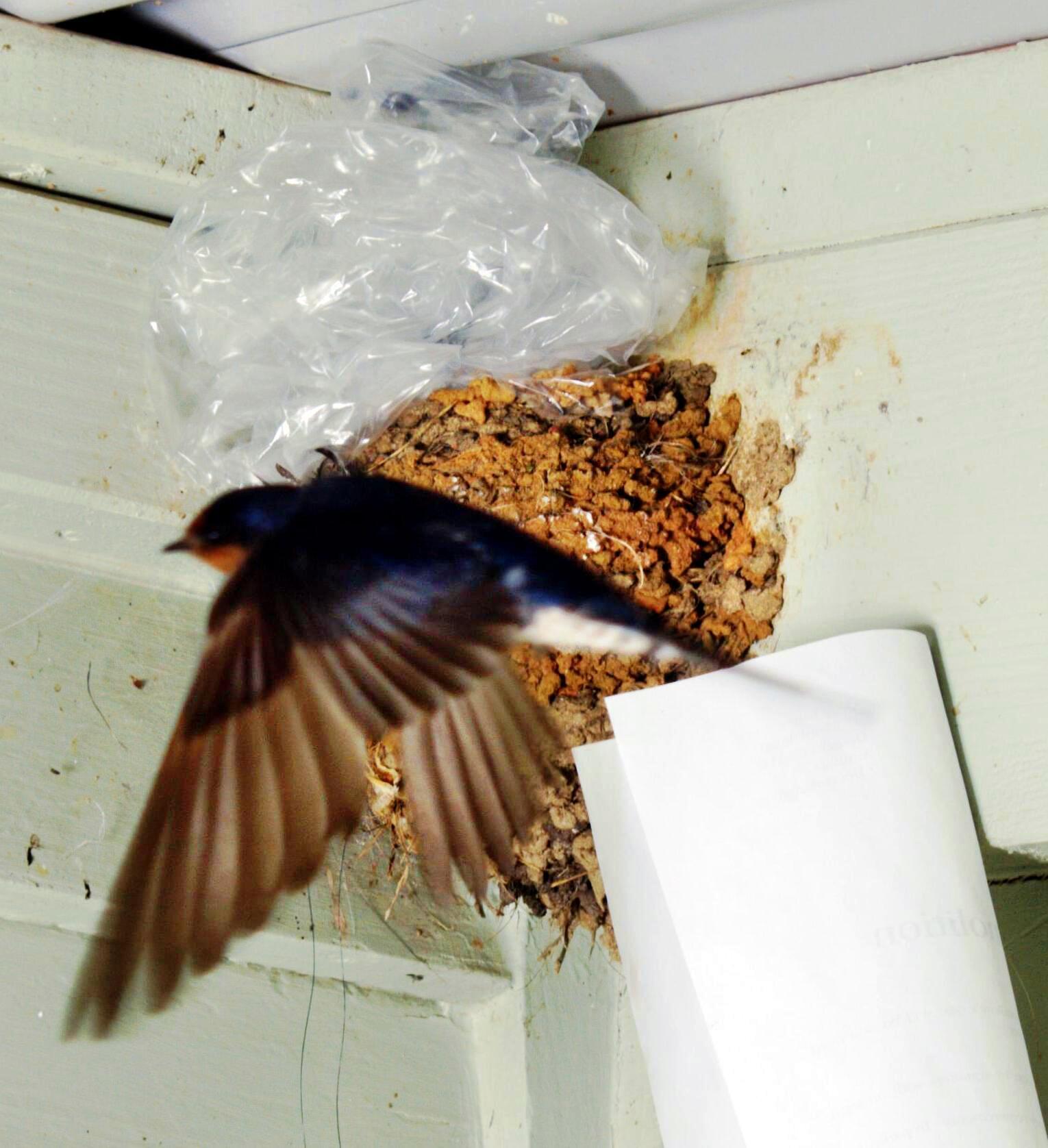swallows-nest-7-detail.jpeg